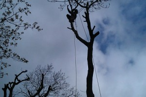 Tree Care St Agnes
