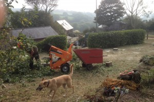 Tree Care Redruth