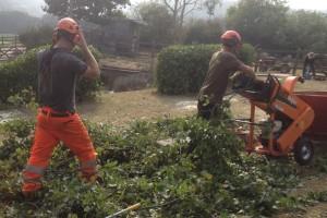 Tree Care Redruth