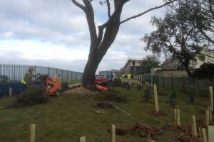 Tree Care Newquay