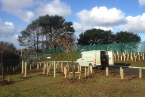 Tree Care Penzance