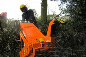 Tree Care St Ives