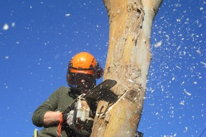 Tree Care Newquay