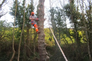 Tree Care Truro