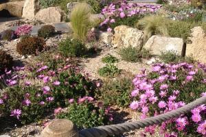 Coastal Garden Falmouth