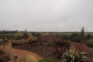 Planting St Agnes
