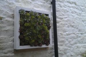 Planting Penzance