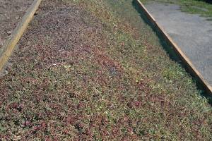 Green Roofs Redruth