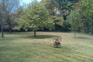 Garden Maintenance Redruth