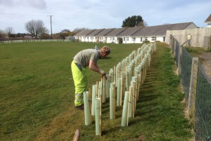 Planting St Ives