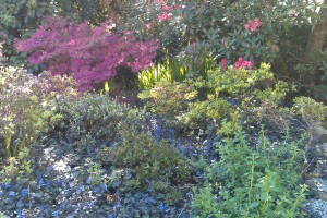 Planting Newquay