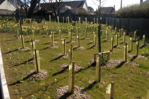 Landscape design and tree planting, Redruth, Cornwall Newquay